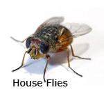 Image Result For Exterminator Cost For Roaches